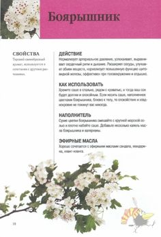 Health Facts, Book Of Shadows, Alternative Medicine, Herbal Medicine, Botanical Illustration, Health And Beauty, Herbalism, Fitness, Herbs
