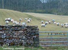 West of Leyburn, North Yorkshire