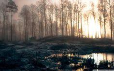 Early Morning Swamp HD desktop wallpaper : Widescreen : High ...