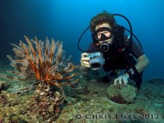 Interested in underwater photography?  Dive Wananavu Fiji offers Digital Underwater Photography workshops with Professional Photographer Chris Liles