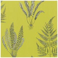 Sanderson Wallpaper A Painters Garden Woodland Ferns Collection DAPGWO101