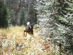 After the Shot: Deer Tracking Tips Whitetail Deer Hunting, Deer Hunting Tips, Big Game Hunting, Archery Hunting, Bow Hunting, Bowfishing, Turkey Hunting, Fishing Tips, The Great Outdoors