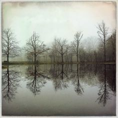 """Lens: Hannah Film: Robusta """"This combo worked very well in this typically Dutch grey weather: the picture is sharp, and the colors and..."""" Henk Goossens"""