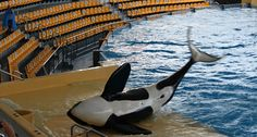 Loro Parque Tenerife is a perfect place to visit with your family. Book now.