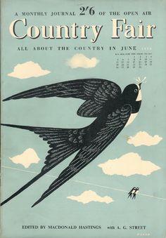 Swallow bird illustration.