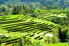 Most people who have visited Bali say that the real Bali can be found where the rice grows. In Bali rice fields can be found almost everywhere, and the Balinese people have depended on this method of agriculture for almost …Read Lombok, Kuta Bali, Komodo, Kerala, Bali Tour Packages, Bali Travel Guide, Small Group Tours, Best Sunset, Travel Activities