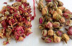 Rosa centifolia e rosa damascena in boccioli. Natura allo stato puro!