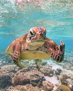 sea life - sea life photography - sea life underwater - sea life artwork - sea life watercolor sea l Baby Sea Turtles, Cute Turtles, Ninja Turtles, Save The Sea Turtles, Cute Little Animals, Cute Funny Animals, Baby Farm Animals, Turtle Love, Happy Turtle