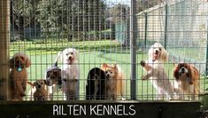 Rilten Kennels offer luxuries dog accommodation in Yarrambat. Dog Boarding Closest to Doreen, Diamond Creek, Eltham, Doncaster, Templestowe and Melbourne northern suburbs. Dog Boarding Near Me, Pet Boarding, Dog Dental Care, Dog Grooming, Cuddling, Your Pet, Dog Cat, Pets, Luxury