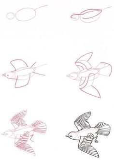 How to Draw a Bird Step by Step Easy with Pictures