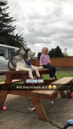 Funny Animal Jokes, Funny Dog Memes, Funny Animal Videos, Funny Animal Pictures, Animal Memes, Videos Funny, Cute Animal Humor, Wild Animals Videos, Funny Captions