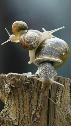 snails. Found on Uploaded by user