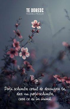 Ideas For Flowers Photography Dark Flora Dark Flowers, Beautiful Flowers, Tiny Flowers, Beautiful Gorgeous, Flowers Garden, Vintage Flowers, Vintage Photography, Nature Photography, Photography Flowers
