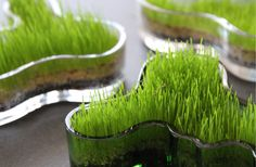 Easter grass in Aalto vases Spring Decoration, Decoration Table, Beautiful Home Gardens, Easter Season, Easter Traditions, Spring Party, Egg Hunt, Easter Wreaths, Easter Recipes