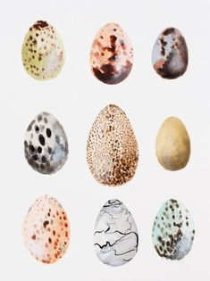 Beautiful Paintings by Laurie Anne Gonzalez Watercolor Paintings, Original Paintings, Original Art, Watercolor Ideas, Desert Art, Pencil Painting, Egg Art, Bird Art, Contemporary Paintings