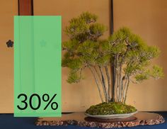 """Get 30% discount on our online Beginner and Intermediate courses until Monday! Use discount code """"30"""" at www.bonsaiempire.com/courses #bonsai"""