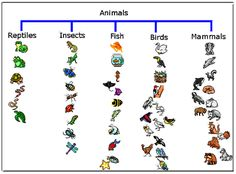 Using Thinking Maps- tree map Animal Science, Animal Activities, Science Activities, Science Ideas, Science Education, Teaching Science, Life Science, Mad Science, Science Lessons