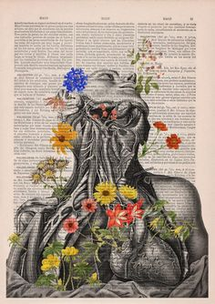 anatomy-illustrations-old-book-pages-prrint-17