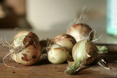 10 foods you can easily regrow from scraps (scallions, ginger, onions, garlic, and more)