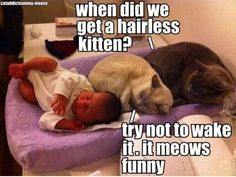 This will be our cats reactions to the baby...except they won't be allowed near the baby and I'd never leave my baby laying on the changing pad like that!!