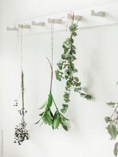 Hippa HINDÖ i arbetsrummet – Livet Hemma Ikea Plants, Dry Plants, Green Plants, Ikea Inspiration, Interior Inspiration, Diy Hanging, Hanging Plants, Wall Hanger, Plant Hanger