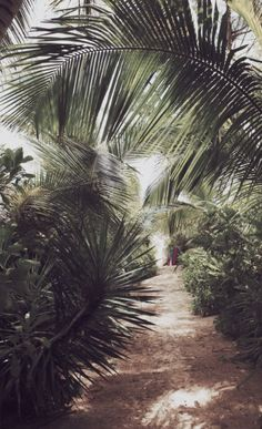 Ideas For Summer Nature Photography Trees Hawaii Aesthetic Photography Nature, Summer Nature Photography, Beach Photography, Travel Photography, Photography Backdrops, California Palm Trees, Palm Trees Beach, Beach Aesthetic, Summer Aesthetic