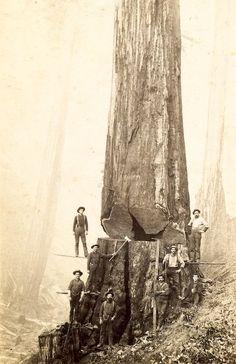 lumbermen : logging in the 1800s