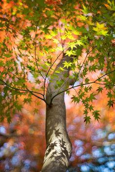 tree ✮ www.pinterest.com/WhoLoves/Nature ✮ #nature