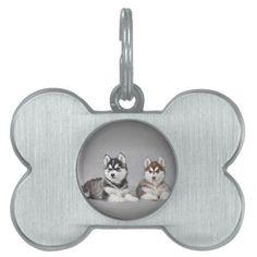 Siberian husky puppies Pet Id Tags - http://www.thepuppy.org/siberian-husky-puppies-pet-id-tags/