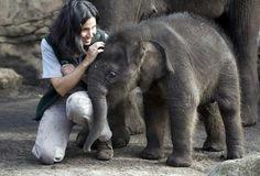 Pathi Harn at Taronga Zoo