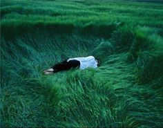 Uploaded by tuvia. Find images and videos about nature, green and grass on We Heart It - the app to get lost in what you love. Ragnor Fell, Slytherin Aesthetic, Le Havre, Foto Art, Story Inspiration, Character Inspiration, Studio Ghibli, Bald Eagle, Yuyu Hakusho