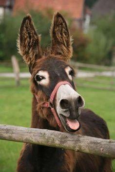 Donkey....