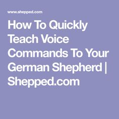 How To Quickly Teach Voice Commands To Your German Shepherd | Shepped.com