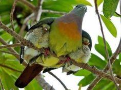 58. motherhood animals_.jpg