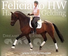 www.HWfarm.com Selected Quality Horses for sale from only the best producing bloodlines. Horses are all sane and tractable with good manners and gorgeous conformation. All are well started and ready to continue on up the levels. Pics & videos!!!