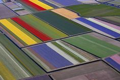 7 million flowers from the air - yep, this is the coolest thing ever.