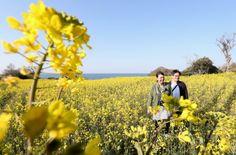 青空の下、見頃を迎えた菜の花を観賞する人たち=25日午後、豊後高田市の長崎鼻リゾートキャンプ場