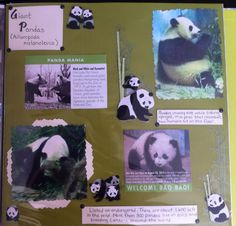 A scrapbook page I made for the Giant Panda exhibit at the Smithsonian Zoo. Love these animals!!!