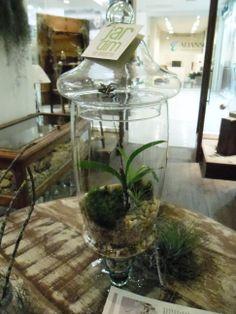Terrário em vidro de decoração, com orquídea