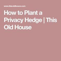 How to Plant a Privacy Hedge | This Old House