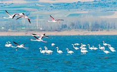 Κερκίνη (Σέρρες) - Λίμνη Κερκίνη
