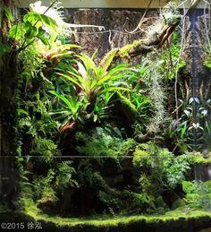 126 best images about Aquariums terrariums vivariums and gecko vivarium crested gecko Terrariums Gecko, Water Terrarium, Aquarium Terrarium, Aquarium Garden, Planted Aquarium, Aquarium Fish, Aquascaping, Gecko Vivarium, Reptile House