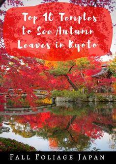 Fall foliage Japan Autumn foliage Japan Autumn in Kyoto Fall in Kyoto Fall foliage in Kyoto Autumn Leaves in Japan Autumn leaves in Kyoto Fall Leaves Tattoo, Autumn Leaves, Autumn Fall, Vietnam, Japan Destinations, Thailand, Japan Travel Guide, Travel Inspiration, Travel Ideas