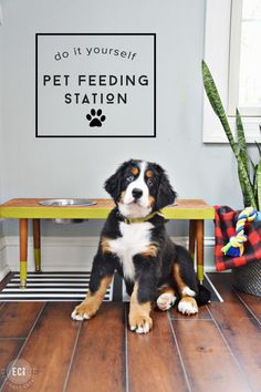 If you follow me on Instagram, then you know that we have two Bernese Mountain Dogs, Pennlyn and Brynn. My daughter even has an IG account dedicated to our dogs (you should check it out-the cuteness i