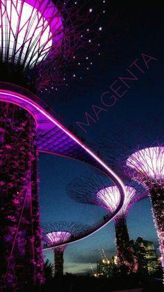 Color of the Week: Magenta by @detaljee
