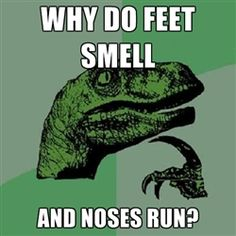 Philosoraptor - Why do feet smell And noses run?