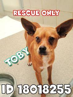 TOBY IS RESCUE ... Lost Dog Rescue Arlington