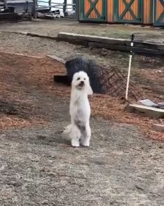 All my respect Look at this little angel that made my heart melt so adorable// THIS IS SO CUTE. Cute Funny Animals, Cute Baby Animals, Funny Dogs, Animals And Pets, Cute Puppies, Cute Dogs, Dogs And Puppies, Doggies, I Love Dogs