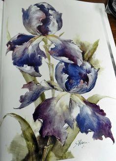 Iris by Stephen Hayes