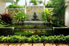 carpes-koi-bassin-poisson-hors-sol-paroi-transparente-verre-entourré-plantes